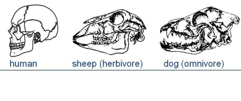 comparative anatomi